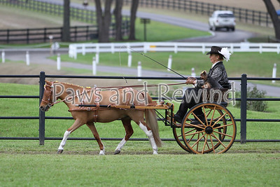 Grand Oaks Saturday: Carriage Dog