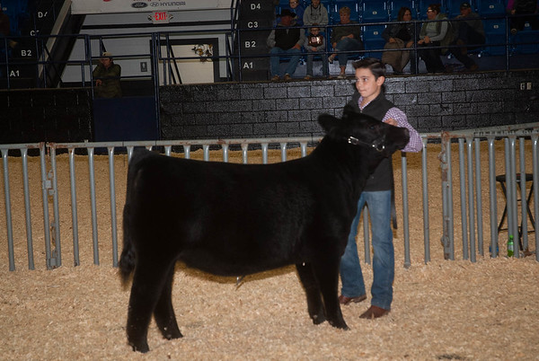 Wichita Mountains Classic Steer & Heifer Show