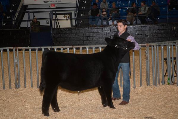 Wichita Mountains Classic Steer & Heifer Show