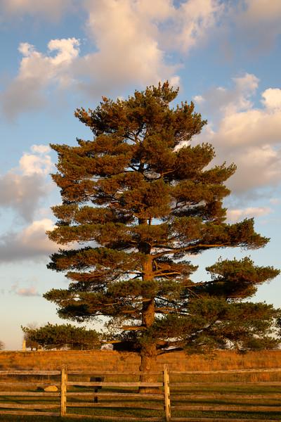 PineEmmittsburgRoad (1 of 1).jpg