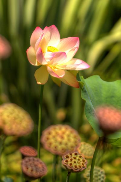 The Flower.jpg