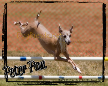 PDT Jumpers Open Round 4 - 12 inch