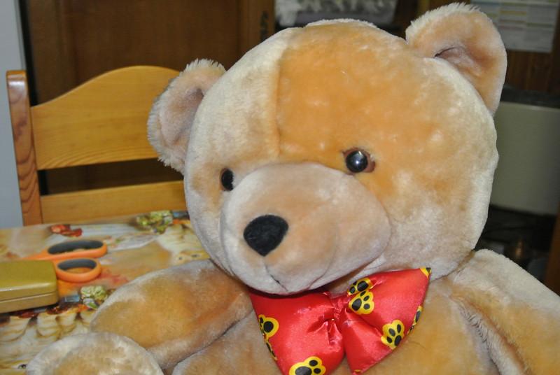 Bear 'Graham' 02.JPG