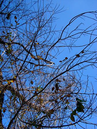 WINTER TREELINES - L.A. STYLE