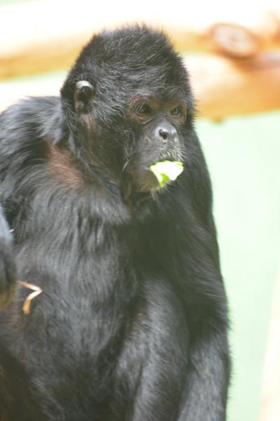 20180624 Antwerpen Zoo GVW_9318.JPG