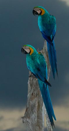 8_Jardin da Amazonia