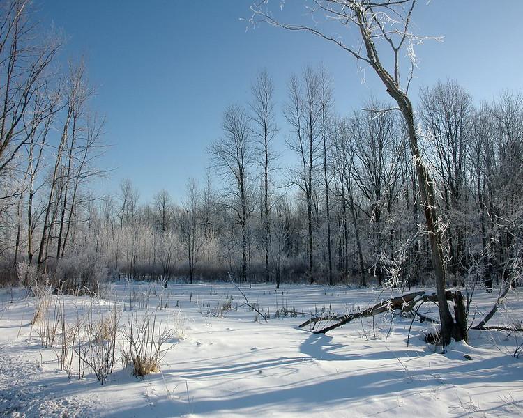 Ice Storm V.jpg