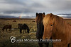 Icelandic Horses<br /> <br /> © Claire McAdams Photography 2010