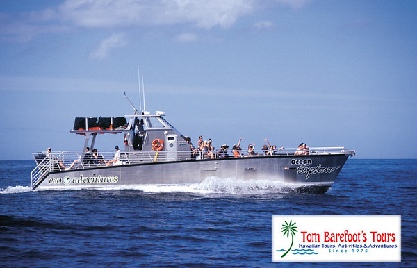 Dolphin Excursions on Maui