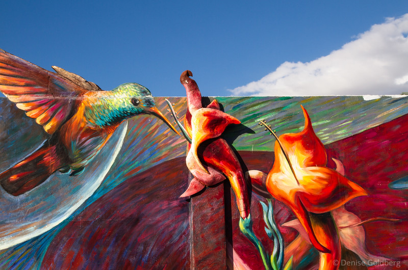 hummingbird feeding, painted on a wall in Tucson, AZ