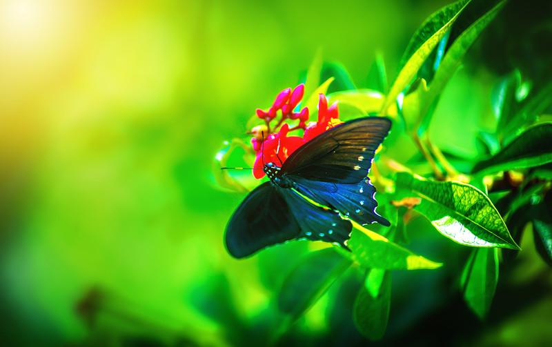 Butterfly-168.jpg