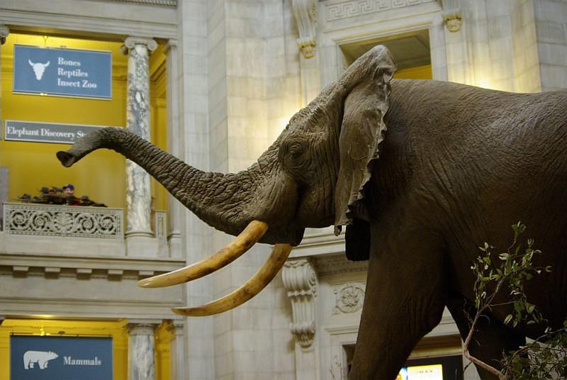 Rotunda Elefant.jpg