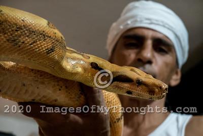 20190715 Snake Handler Rafael Yifrach