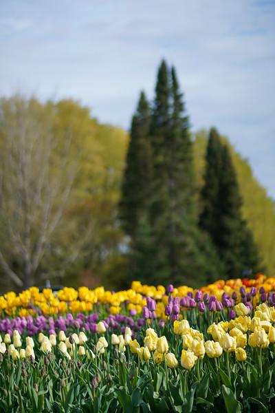 Arboretum nw1-9.JPG