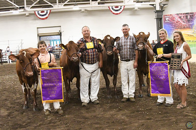 Illinois State Fair Milking Shorthorn 2018