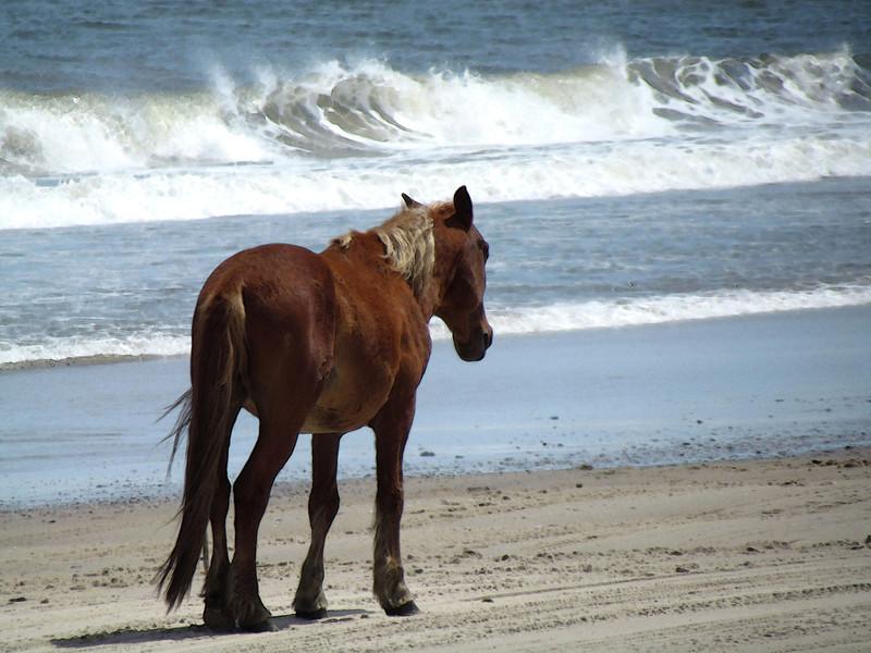 Outer Banks Corolla (210).jpg