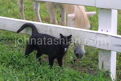 Horse & Cat - 2006