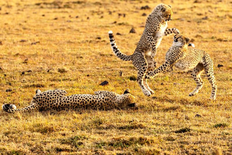 Kenya 2015-09400.jpg