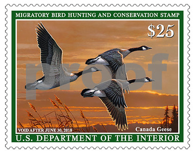 new-federal-duck-stamp-flies-into-stores
