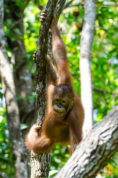 Malaysia-Rasa Ria Shangri La-Kota Kinabalu-7529.jpg