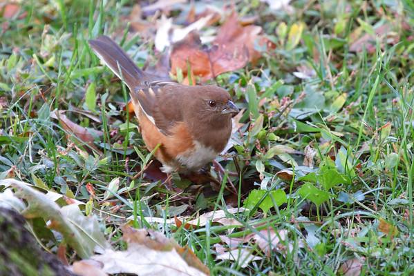 """2011 """"November"""" Yardbirds"""