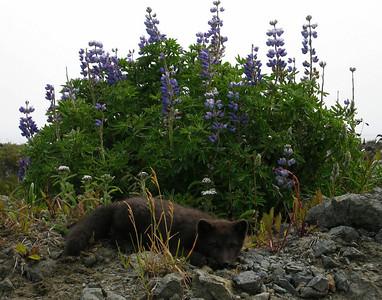 Shemya Island, Alaska