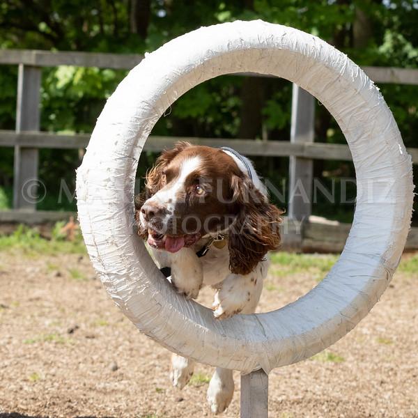 Dogs-8044.jpg