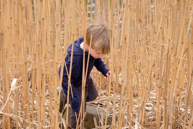 20160315 019 Meadowlark Gardens.jpg
