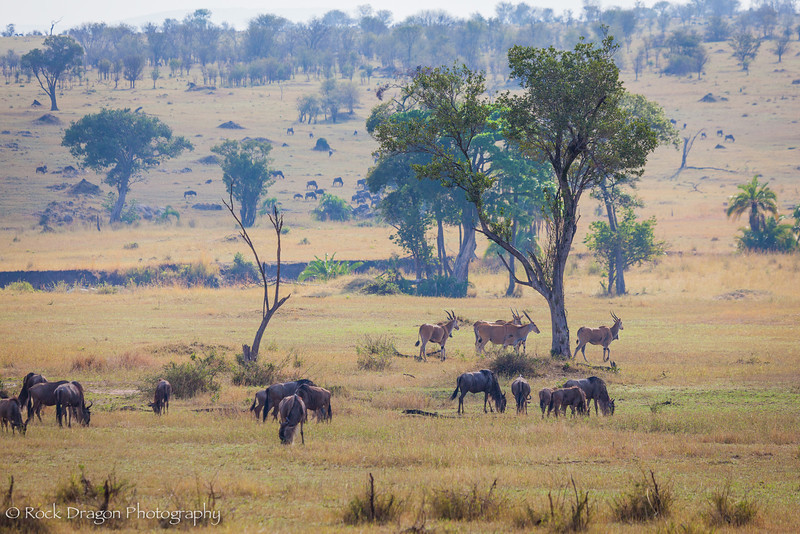 South_Serengeti-65.jpg