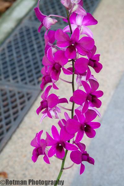 Singapore gardens-4738.jpg