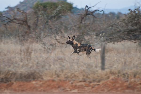 Kenya (Jan/Feb 2011)