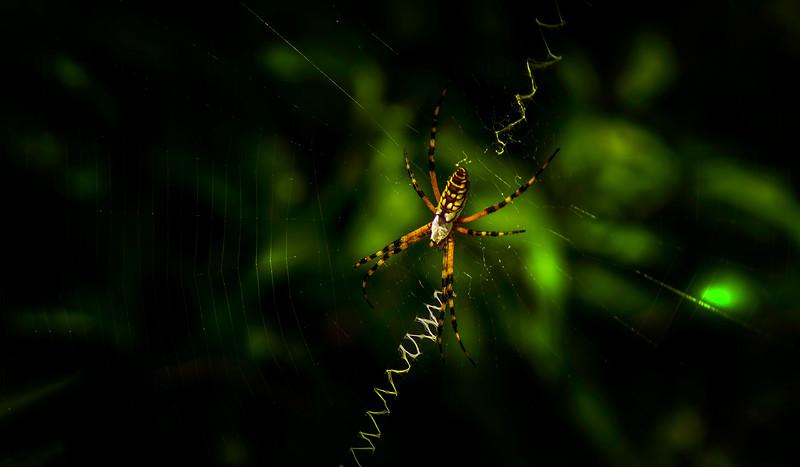 Spiders-Arachnids-053.jpg