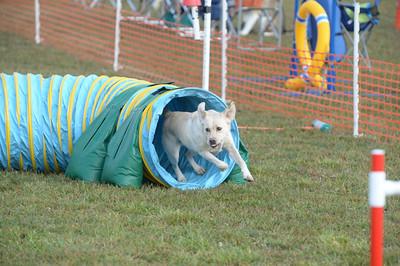 Delaware Valley German Shepherd Dog Club AKC Agility Trial September 20-21
