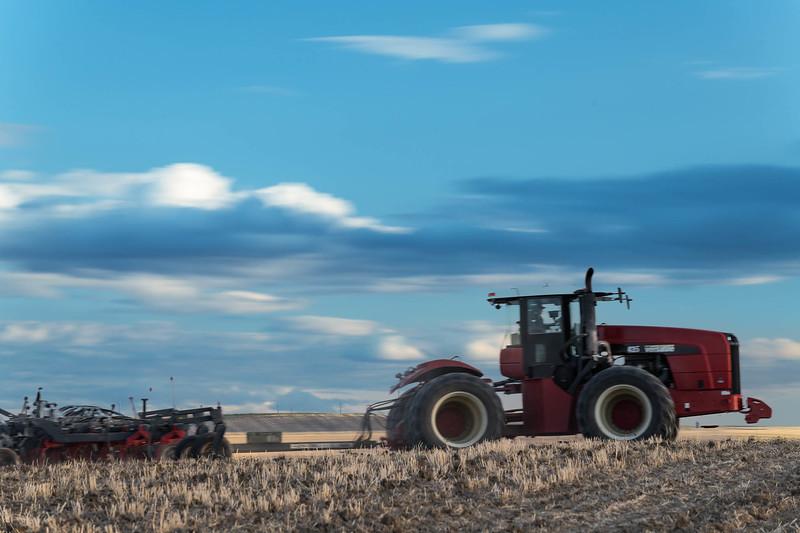 barley 9.jpg