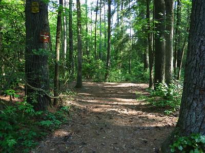 Wild Cat Creek Trail to F4