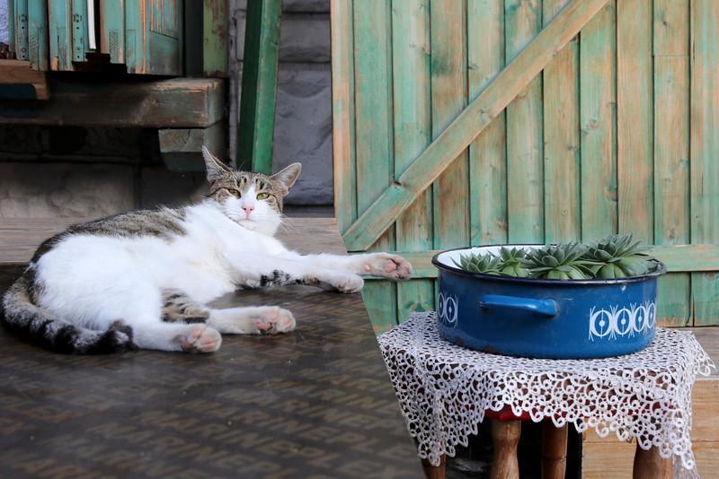 Sarajevo kitty
