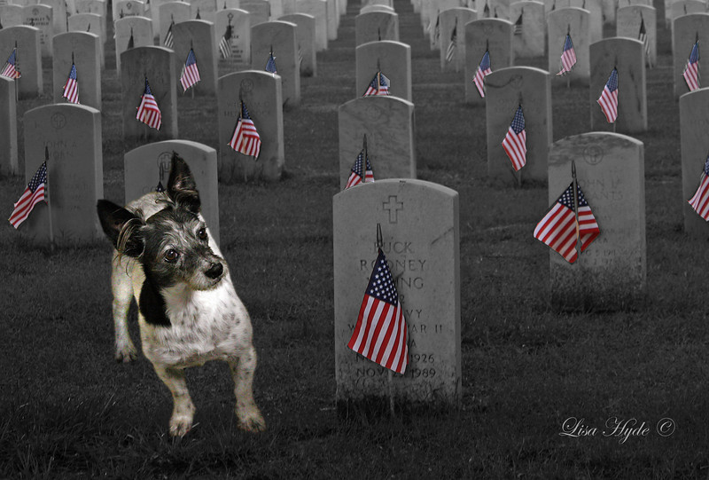 Cookie on Memorial Day  MAY signed.jpg