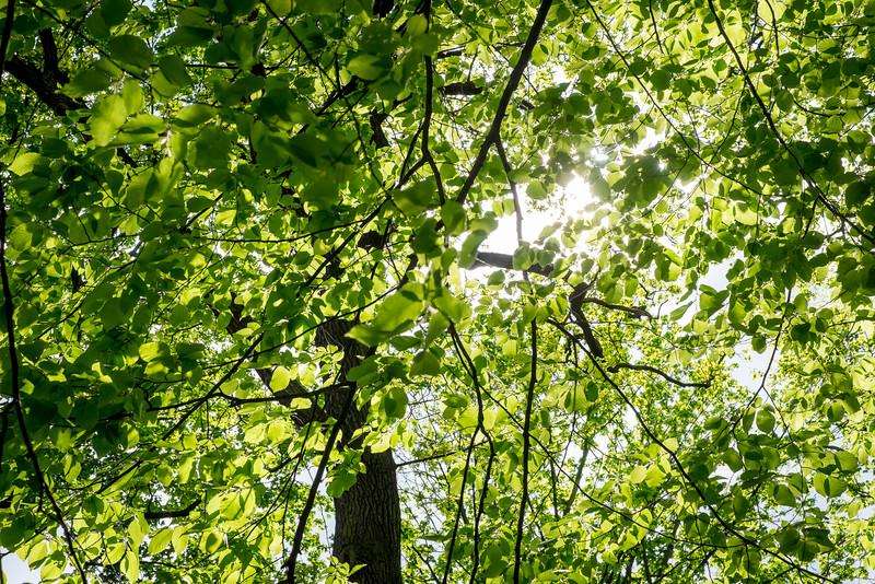 summer_15_006.jpg