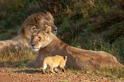 Kenya, Masai and Mara
