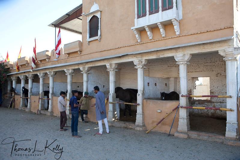Marwar horse stable in Ranakpur is owned by Ajit Singh.