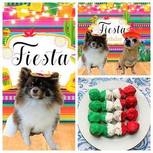 Hector's first fiesta!
