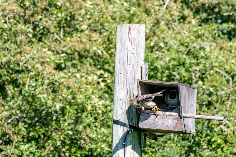 Woods_Mill_850-4605.jpg