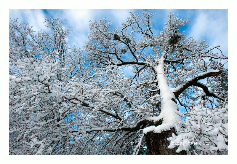 Winter Fractals 2.jpg