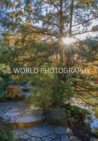 Anderson Japanese Gardens22022.jpg