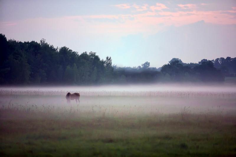 Horse-mist.jpg