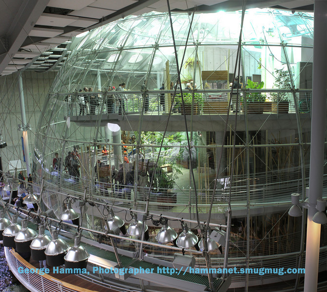 The Rainforest is inside a plastic dome that keeps the butterflys and himidity inside.