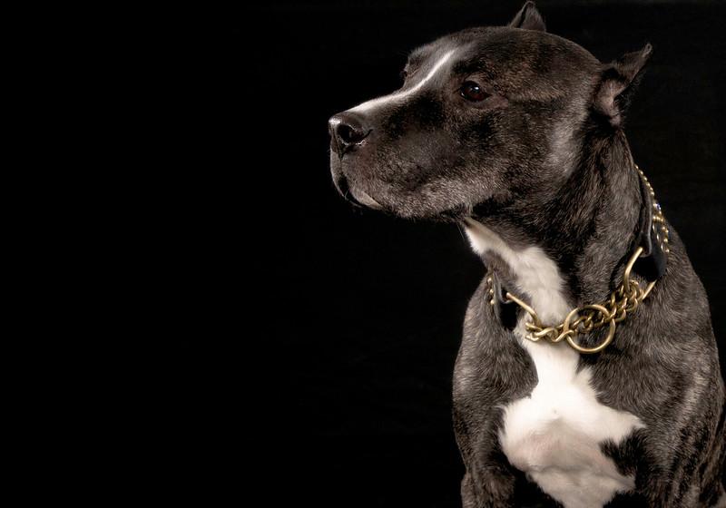 Dog17.jpg