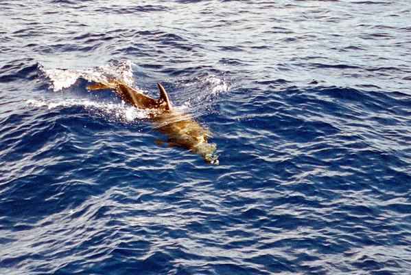 Hawaii: 2001