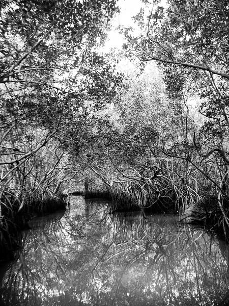 Everglades-54.jpg