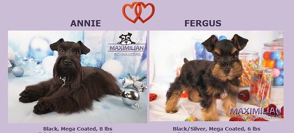 Annie & Fergus Puppies, DOB 3/25/2020